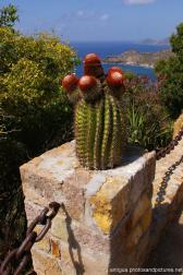 Cactus with red bumps in Shirley Heights Antigua.jpg