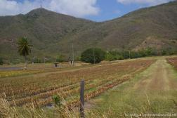 Pinapple farm and hills of Antigua.jpg