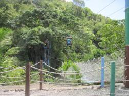 Antigua zip line tree dive.jpg