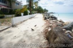 Birds next to Antigua Village at Dickenson Bay in Antigua.jpg